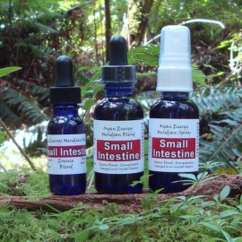 Fire Element: Small Intestine Organ Energy Meridian Essence Blend