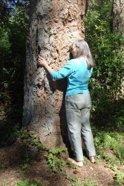 diana and tree