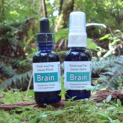 Brain Essence Blend - Tree Frog Farm